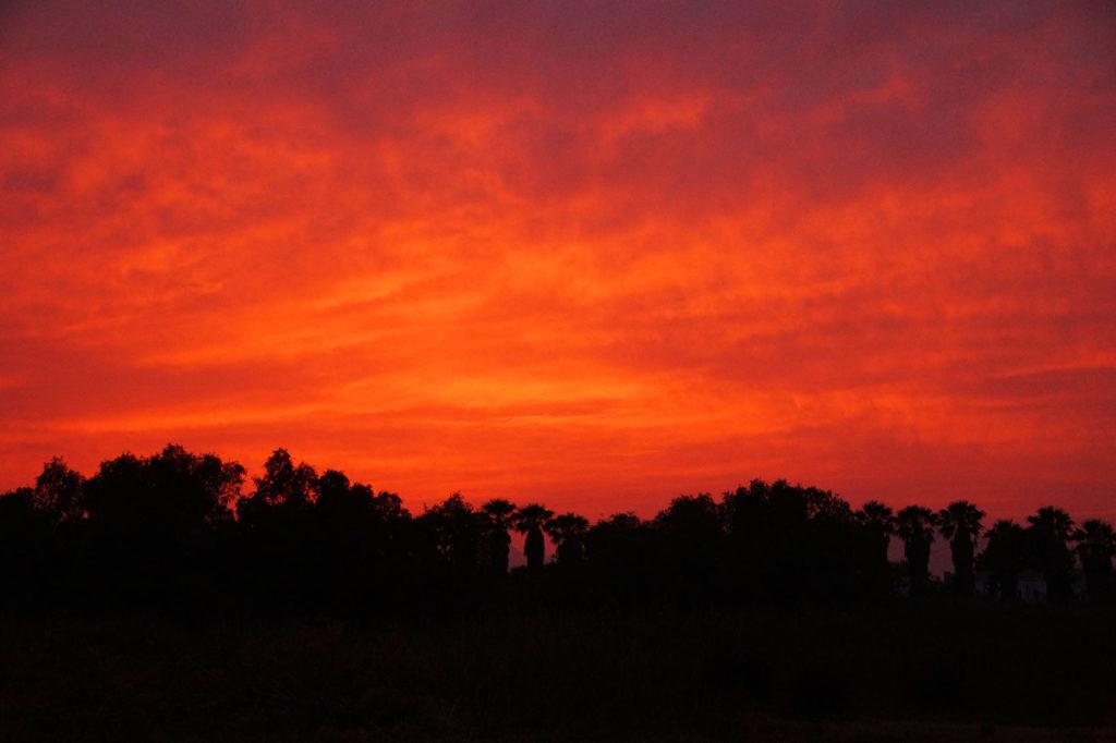 Feurig roter Sonnenuntergand und die Silhoutten von vielen Palmen.